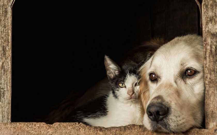 Aprenda a fazer a troca de ração do seu pet